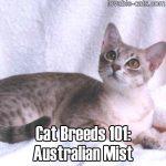 Cat Breeds 101: Australian Mist