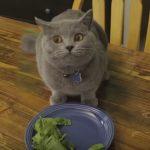 Cats Do Not Eat Veggies