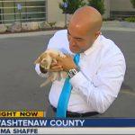 Kitten Crashes TV Reporter Nima Shaffe's Live Shot